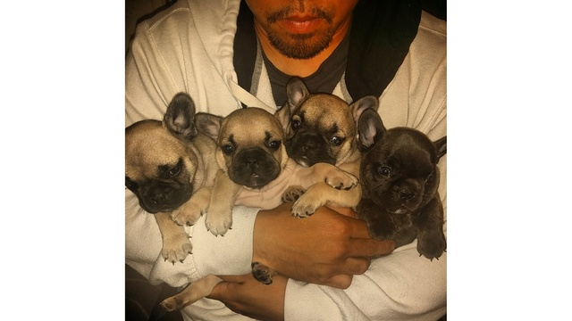 National Puppy Day _c2 5 wk old French Bulldogs - Dea_134171