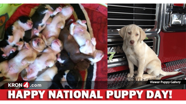 Photo Gallery: KRON Viewers Celebrate National Puppy Day