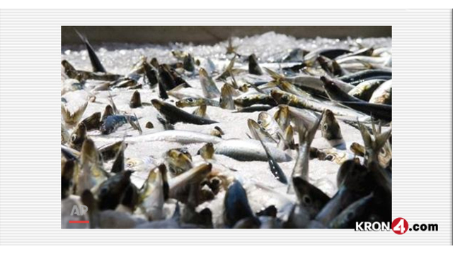 Feds likely to shut down sardine fishing on West Coast