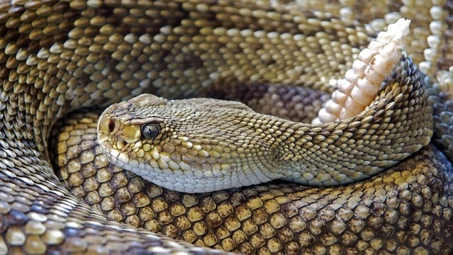 Man bitten by rattlesnake on Concord hiking trail