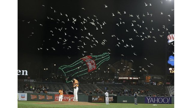 San Francisco Giants baseball fans, players have common enemy: seagulls