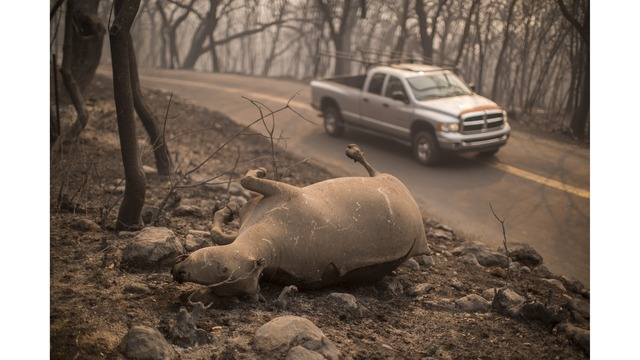 Multiple Wildfires Continue To Ravage Through California Wine Country_648464