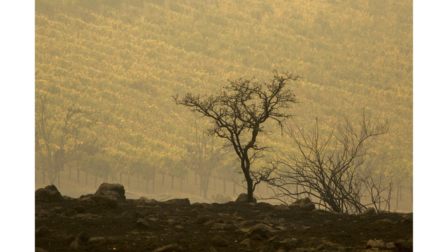 Multiple Wildfires Continue To Ravage Through California Wine Country_648457