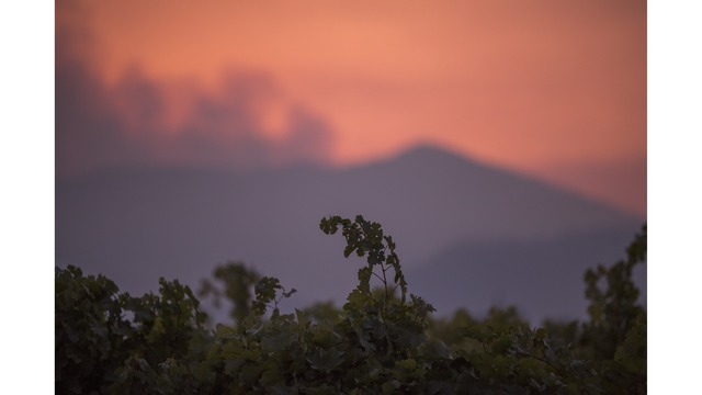 Multiple Wildfires Continue To Ravage Through California Wine Country_649996