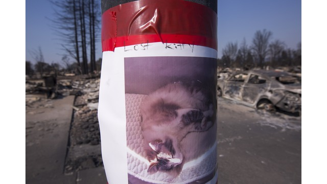 Multiple Wildfires Continue To Ravage Through California Wine Country_651620