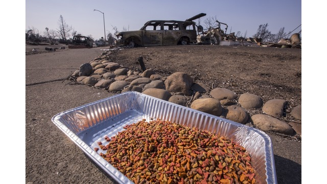 Multiple Wildfires Continue To Ravage Through California Wine Country_651622