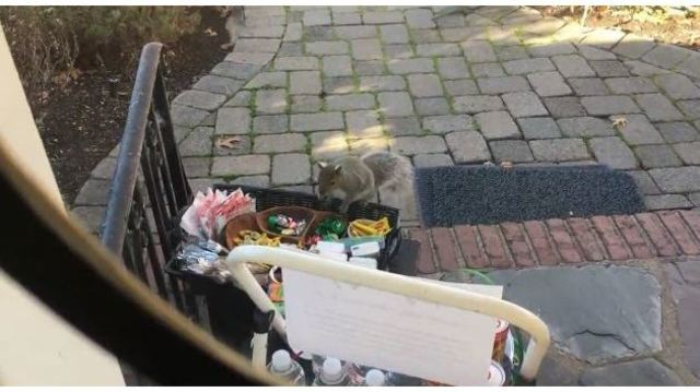 WATCH: Fat squirrel with expensive taste raids family's gourmet chocolates