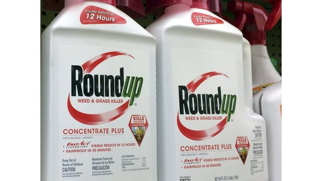 Lawsuits alleging Roundup weed killer caused cancer can move forward